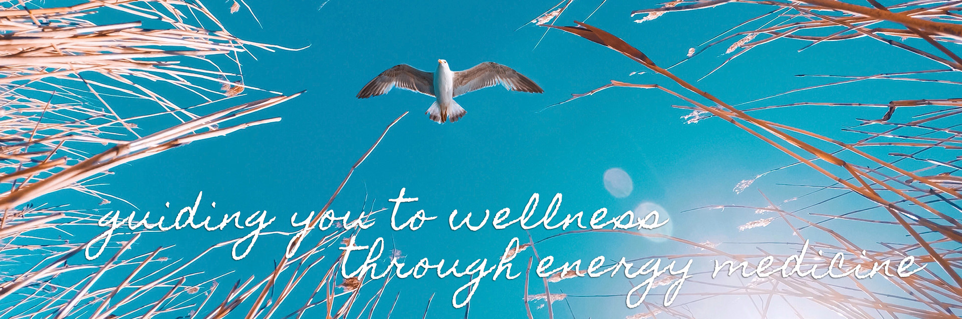guiding you to wellness through energy medicine